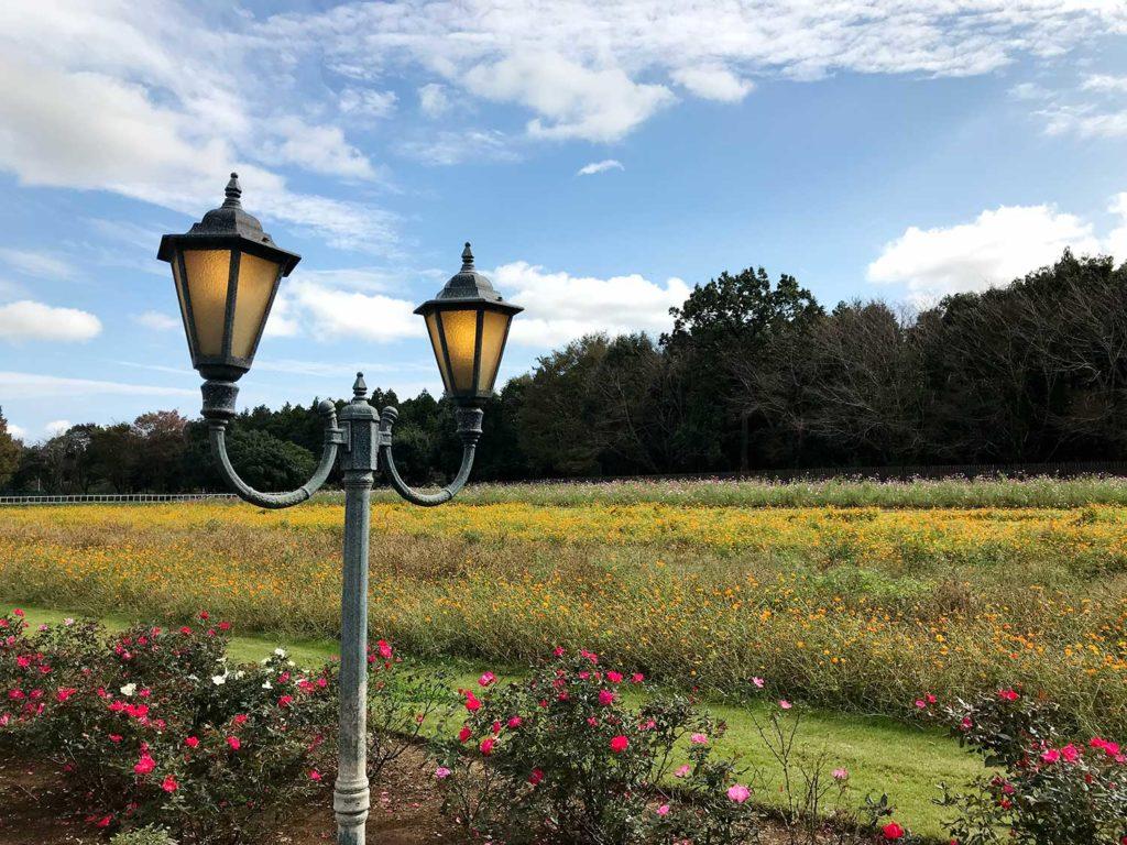 こもれび森のイバライドの街灯とお花畑