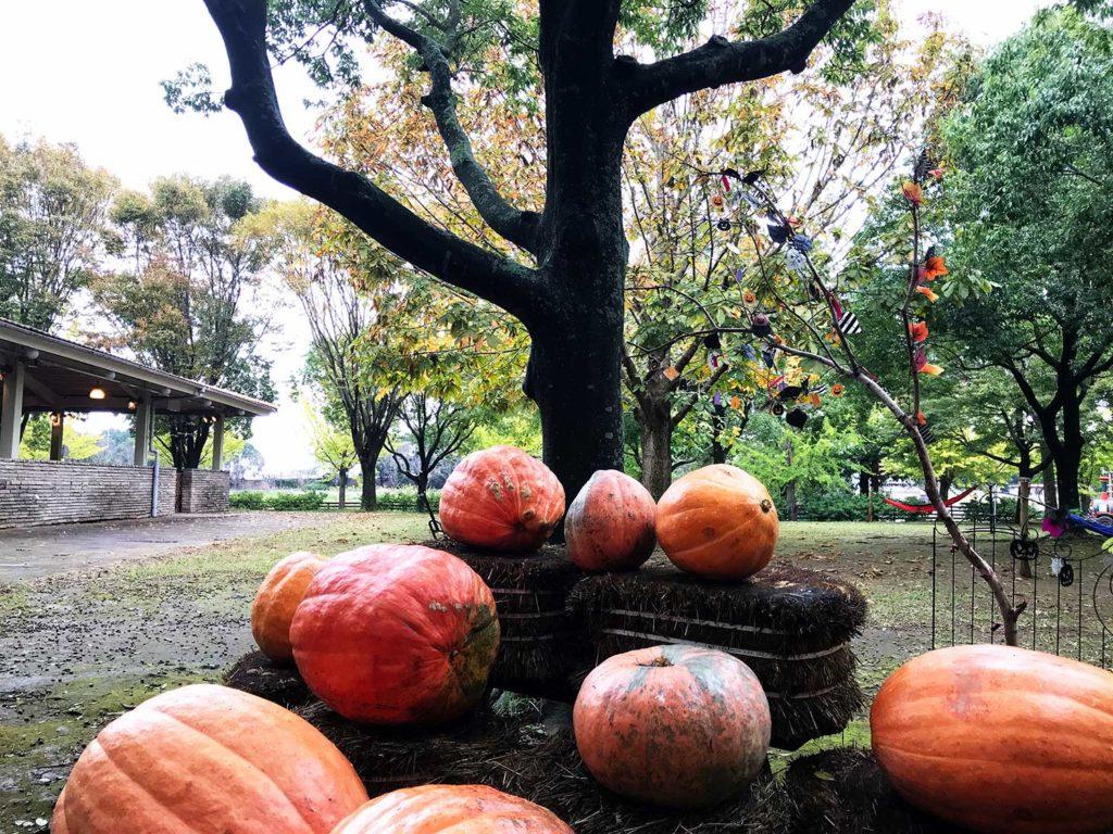 こもれび森のイバライドのかぼちゃと木