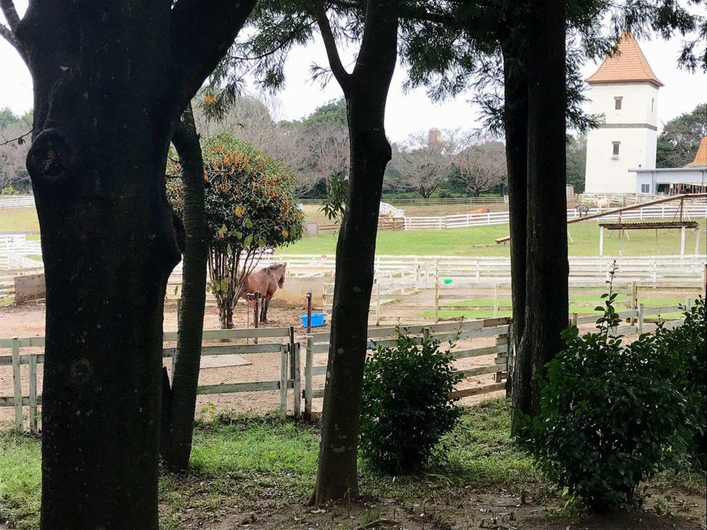 こもれび森のイバライドの馬と木